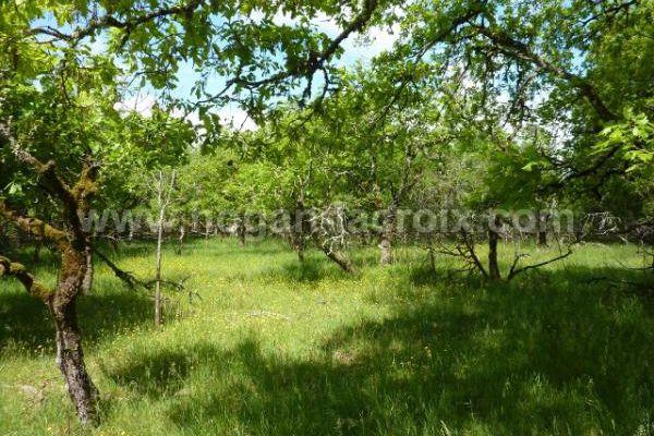 Immobilier Dordogne Vente Ref : 4864