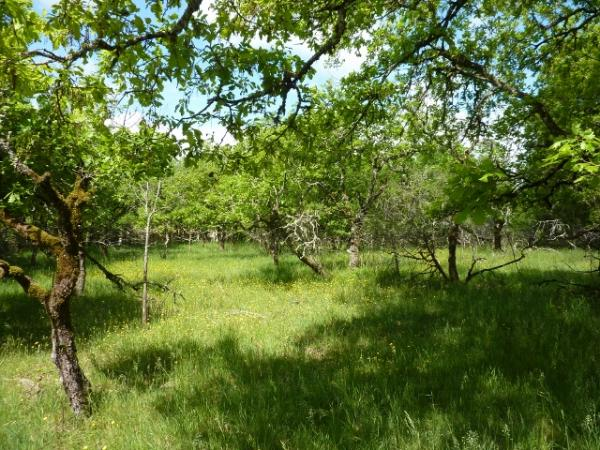 25KM AWAY FROM SARLAT, LOVELY CONSTRUCTIBLE LAND OF 1.73 ACRES !! NICE LOCATION !!